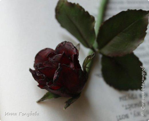 Экспериментирую)))Давно мне не дает покоя увядшие розы,так хочется научиться их лепить.Вот учусь)))Еще работать и работать над ней,но первый шаг в этом направлении сделан! фото 4
