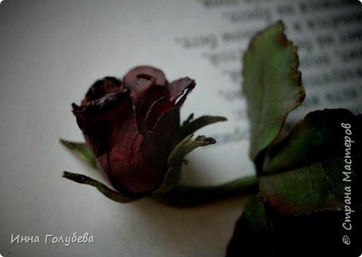 Экспериментирую)))Давно мне не дает покоя увядшие розы,так хочется научиться их лепить.Вот учусь)))Еще работать и работать над ней,но первый шаг в этом направлении сделан! фото 5