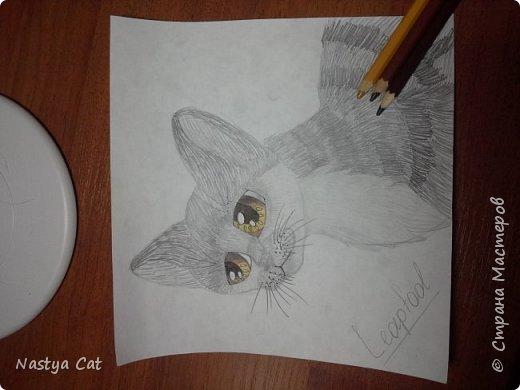 Я люблю читать книги из серии Коты  - воители. И вот решила поучаствовать в конкурсе. Знакомьтесь! Это Белка! ;) фото 3