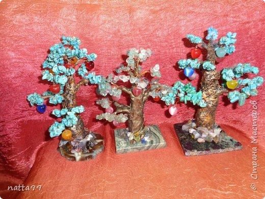 яблоньки фото 1