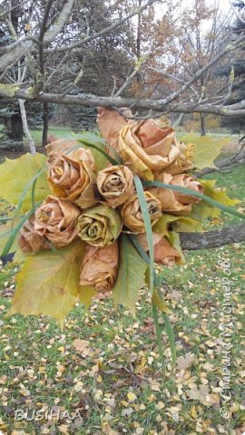 Всем жителям страны большой привет!!  Этот букет из кленовых листьев я смастерила во время семейной прогулки по парку. По времени заняло около 30 минут. ни ножниц, ни ниток ни еще чего -нибудь... Только листья....  И чуток последних осенних травинок.