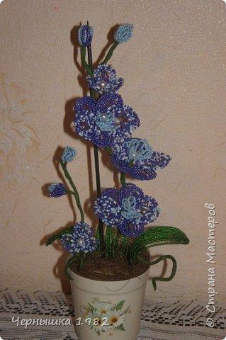 Я давно мечтала купить себе орхидею из бисера, но решила попробовать сделать сама, хотя долго боялась браться. Думала ничего не получится. А теперь, наоборот, заразилась этим рукоделием и хочется попробовать еще сплести другие виды деревьев и цветов.  А вот и моя первая ОРХИДЕЙКА, правда получилось маленькой)  фото 1