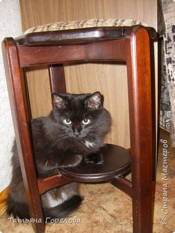 """Этот  котяш сделан по принципу предыдущего слоника, из массы папье-маше на основе футляра из-под """"киндер-сюрприза."""" фото 3"""