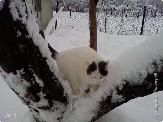 """Город в котором я живу называется красиво так - СнЕжное! И он полностью оправдывает своё название. Как я писала в одном из комментариев, если в соседних городах и сёлах снегом припорошило землю, то у нас насыпало по щиколотку. У соседей по щиколотку - у нас по коленку... А бывает и так, что у нас снега, как говорил Матроскин, """"завались"""", в соседних городах ни снежинки! И когда к нам едут в гости, просим учитывать, что у нас полным-полно снега и мороз. Все улыбаются и хихикают (те, кто едет к нам впервые). Мол """"Какой такой снег?!"""" И оооочччееень удивляются, когда видят сугробы по самую крышу! А ведь в каких-то десяти км от города снега нет и в помине! Так, слегка, кое-где и еле-еле заметно.  Фото прошлой зимы. Январь 30, 31 и начало февраля.  фото 35"""