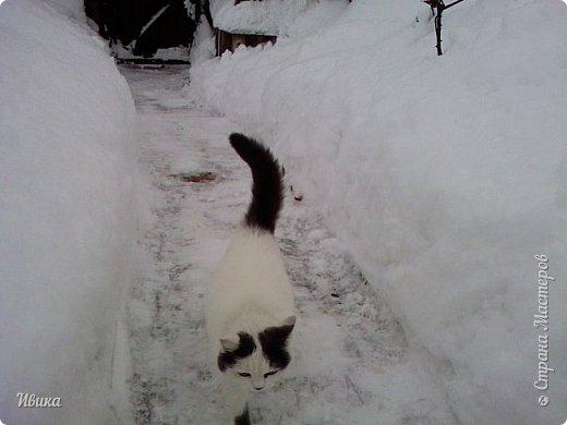 """Город в котором я живу называется красиво так - СнЕжное! И он полностью оправдывает своё название. Как я писала в одном из комментариев, если в соседних городах и сёлах снегом припорошило землю, то у нас насыпало по щиколотку. У соседей по щиколотку - у нас по коленку... А бывает и так, что у нас снега, как говорил Матроскин, """"завались"""", в соседних городах ни снежинки! И когда к нам едут в гости, просим учитывать, что у нас полным-полно снега и мороз. Все улыбаются и хихикают (те, кто едет к нам впервые). Мол """"Какой такой снег?!"""" И оооочччееень удивляются, когда видят сугробы по самую крышу! А ведь в каких-то десяти км от города снега нет и в помине! Так, слегка, кое-где и еле-еле заметно.  Фото прошлой зимы. Январь 30, 31 и начало февраля.  фото 36"""