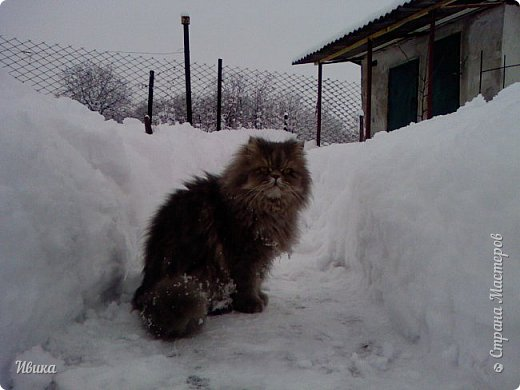 """Город в котором я живу называется красиво так - СнЕжное! И он полностью оправдывает своё название. Как я писала в одном из комментариев, если в соседних городах и сёлах снегом припорошило землю, то у нас насыпало по щиколотку. У соседей по щиколотку - у нас по коленку... А бывает и так, что у нас снега, как говорил Матроскин, """"завались"""", в соседних городах ни снежинки! И когда к нам едут в гости, просим учитывать, что у нас полным-полно снега и мороз. Все улыбаются и хихикают (те, кто едет к нам впервые). Мол """"Какой такой снег?!"""" И оооочччееень удивляются, когда видят сугробы по самую крышу! А ведь в каких-то десяти км от города снега нет и в помине! Так, слегка, кое-где и еле-еле заметно.  Фото прошлой зимы. Январь 30, 31 и начало февраля.  фото 34"""
