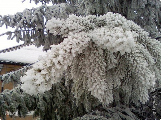 """Город в котором я живу называется красиво так - СнЕжное! И он полностью оправдывает своё название. Как я писала в одном из комментариев, если в соседних городах и сёлах снегом припорошило землю, то у нас насыпало по щиколотку. У соседей по щиколотку - у нас по коленку... А бывает и так, что у нас снега, как говорил Матроскин, """"завались"""", в соседних городах ни снежинки! И когда к нам едут в гости, просим учитывать, что у нас полным-полно снега и мороз. Все улыбаются и хихикают (те, кто едет к нам впервые). Мол """"Какой такой снег?!"""" И оооочччееень удивляются, когда видят сугробы по самую крышу! А ведь в каких-то десяти км от города снега нет и в помине! Так, слегка, кое-где и еле-еле заметно.  Фото прошлой зимы. Январь 30, 31 и начало февраля.  фото 2"""