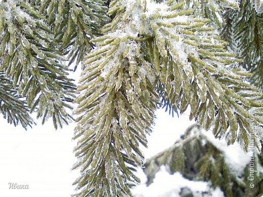 """Город в котором я живу называется красиво так - СнЕжное! И он полностью оправдывает своё название. Как я писала в одном из комментариев, если в соседних городах и сёлах снегом припорошило землю, то у нас насыпало по щиколотку. У соседей по щиколотку - у нас по коленку... А бывает и так, что у нас снега, как говорил Матроскин, """"завались"""", в соседних городах ни снежинки! И когда к нам едут в гости, просим учитывать, что у нас полным-полно снега и мороз. Все улыбаются и хихикают (те, кто едет к нам впервые). Мол """"Какой такой снег?!"""" И оооочччееень удивляются, когда видят сугробы по самую крышу! А ведь в каких-то десяти км от города снега нет и в помине! Так, слегка, кое-где и еле-еле заметно.  Фото прошлой зимы. Январь 30, 31 и начало февраля.  фото 5"""