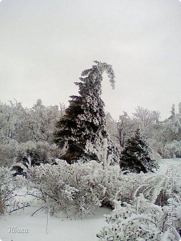 """Город в котором я живу называется красиво так - СнЕжное! И он полностью оправдывает своё название. Как я писала в одном из комментариев, если в соседних городах и сёлах снегом припорошило землю, то у нас насыпало по щиколотку. У соседей по щиколотку - у нас по коленку... А бывает и так, что у нас снега, как говорил Матроскин, """"завались"""", в соседних городах ни снежинки! И когда к нам едут в гости, просим учитывать, что у нас полным-полно снега и мороз. Все улыбаются и хихикают (те, кто едет к нам впервые). Мол """"Какой такой снег?!"""" И оооочччееень удивляются, когда видят сугробы по самую крышу! А ведь в каких-то десяти км от города снега нет и в помине! Так, слегка, кое-где и еле-еле заметно.  Фото прошлой зимы. Январь 30, 31 и начало февраля.  фото 16"""
