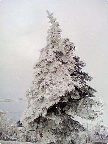 """Город в котором я живу называется красиво так - СнЕжное! И он полностью оправдывает своё название. Как я писала в одном из комментариев, если в соседних городах и сёлах снегом припорошило землю, то у нас насыпало по щиколотку. У соседей по щиколотку - у нас по коленку... А бывает и так, что у нас снега, как говорил Матроскин, """"завались"""", в соседних городах ни снежинки! И когда к нам едут в гости, просим учитывать, что у нас полным-полно снега и мороз. Все улыбаются и хихикают (те, кто едет к нам впервые). Мол """"Какой такой снег?!"""" И оооочччееень удивляются, когда видят сугробы по самую крышу! А ведь в каких-то десяти км от города снега нет и в помине! Так, слегка, кое-где и еле-еле заметно.  Фото прошлой зимы. Январь 30, 31 и начало февраля.  фото 19"""