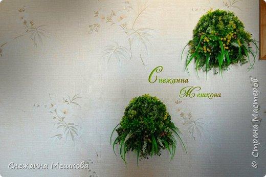 Декоративное панно ,без горшочка. Искусственная зелень многих типов.Украсит любую комнату , лёгок и удобен в уборке. фото 1