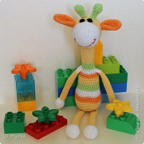 Жирафки фото 3