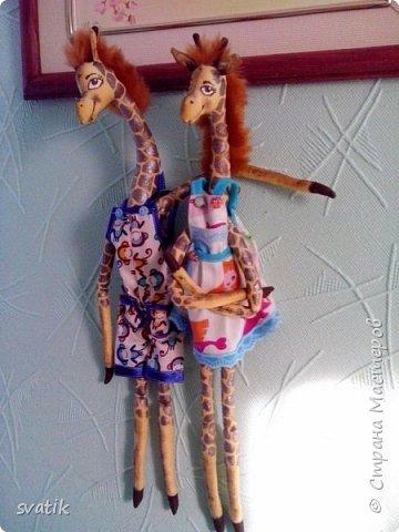 Эти жирафушки уехали жить в город курорт Саки. Судя по их довольным мордашкам им там очень уютно и комфортно. фото 2