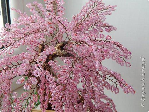 Моя новая работа- сакура. Я уже показывала розовое дерево. То дерево изначально задумывалось как сакура, но когда наплела веточек,понела что оттенок бисера слишком светлый и блёклый для сакуры. Тогда я собрала дома все остатки бисера розовых оттенков. Нашлось примерно 5 оттенков. Намешала их и добавила к розовому бисеру,который использовала в розовом дерево. Сочетание мне очень понравилось. Веточки тоже решила делать длинными, чтоб красиво свисали. Микса бисера мне не хватило. Пришлось бежать в магазин и докупать похожие цвета. Опять добавила к тому розовому и смешала. Думала что будет сильное отличие,но когда сравнила веточки,разницы практически не было. Наплела большую кучу веточек разной длины. Собрала дерево, не понравилось. Решила переделать. В итоге получилось то, чтотвы видете. фото 5