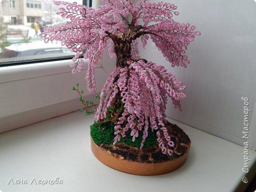 Моя новая работа- сакура. Я уже показывала розовое дерево. То дерево изначально задумывалось как сакура, но когда наплела веточек,понела что оттенок бисера слишком светлый и блёклый для сакуры. Тогда я собрала дома все остатки бисера розовых оттенков. Нашлось примерно 5 оттенков. Намешала их и добавила к розовому бисеру,который использовала в розовом дерево. Сочетание мне очень понравилось. Веточки тоже решила делать длинными, чтоб красиво свисали. Микса бисера мне не хватило. Пришлось бежать в магазин и докупать похожие цвета. Опять добавила к тому розовому и смешала. Думала что будет сильное отличие,но когда сравнила веточки,разницы практически не было. Наплела большую кучу веточек разной длины. Собрала дерево, не понравилось. Решила переделать. В итоге получилось то, чтотвы видете. фото 4
