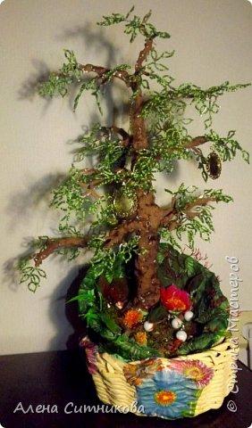 Семейное древо фото 1