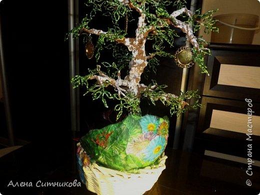 Семейное древо фото 5