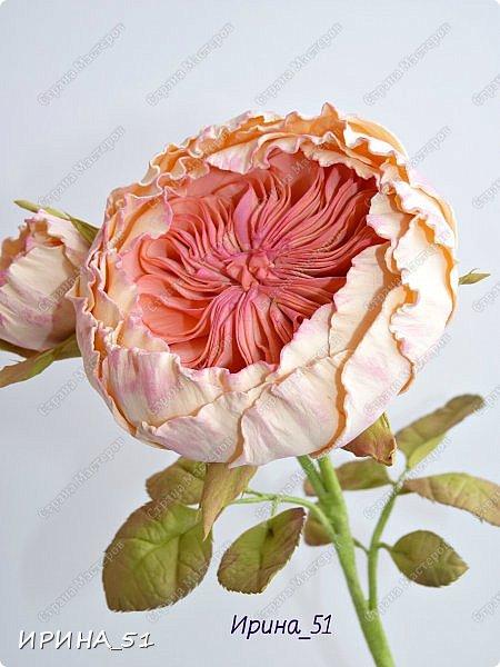 Пионовидная роза Давида Остина из фоамирана +заколочка. фото 1
