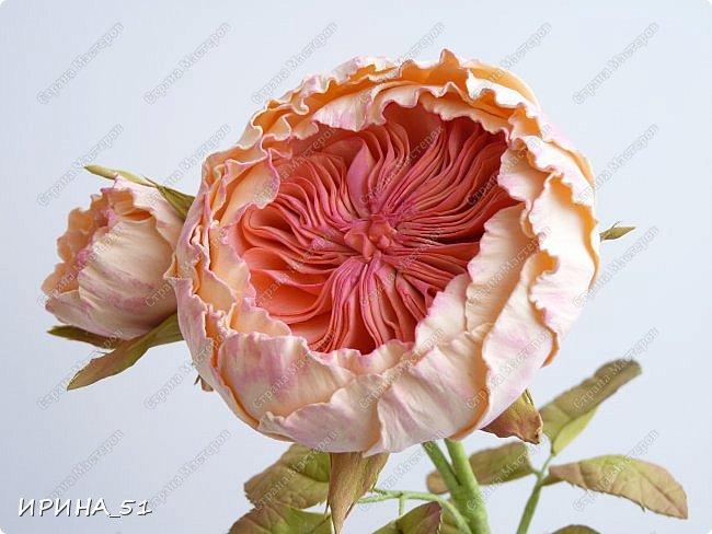 Пионовидная роза Давида Остина из фоамирана +заколочка. фото 2