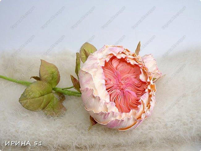 Пионовидная роза Давида Остина из фоамирана +заколочка. фото 5