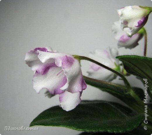 Расцвела моя фитония. Очень ждала ее цветения... фото 20
