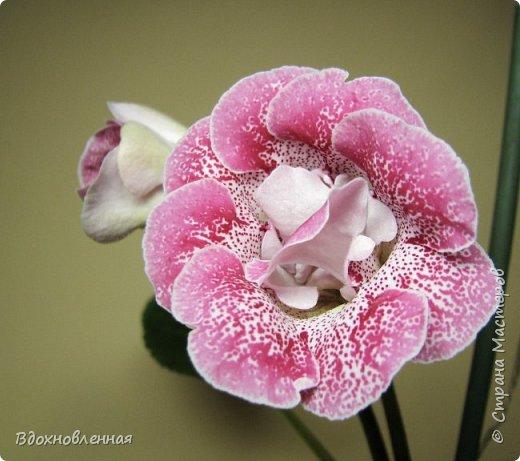 Расцвела моя фитония. Очень ждала ее цветения... фото 14