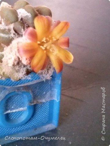Добрый день, земляки! Продолжаю свой рассказ о цветущих кактусах из моей коллекции. Первая часть - http://stranamasterov.ru/node/1002926. О кактусах у меня есть ещё одна запись - http://stranamasterov.ru/node/1002823 Также расскажу о некоторых кактусах, плоды которых употребляют в пищу. Это какой-то Турбиникарпус. Размер кактуса около 3-4 сантиметров. На следующих фото ещё Турбиникарпусы разных видов. фото 12