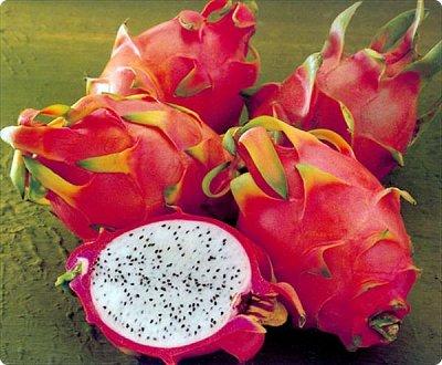Добрый день, земляки! Продолжаю свой рассказ о цветущих кактусах из моей коллекции. Первая часть - http://stranamasterov.ru/node/1002926. О кактусах у меня есть ещё одна запись - http://stranamasterov.ru/node/1002823 Также расскажу о некоторых кактусах, плоды которых употребляют в пищу. Это какой-то Турбиникарпус. Размер кактуса около 3-4 сантиметров. На следующих фото ещё Турбиникарпусы разных видов. фото 13