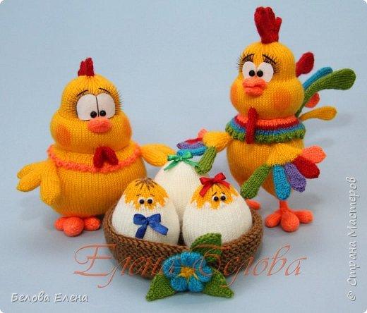 Семейство Куриных фото 3