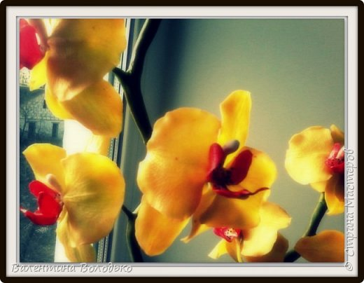 Здравствуйте дорогие жители Страны Мастеров!!!С праздником святого Валентина!!!.У меня снова орхидейки.Продолжаю эксперементировать и выполнять заказы.А также хочу поделиться с вами своей радостью,о моих увлечениях напечатали статью в районной газете ,а также организовали выставку в районному музее .Жаль не разрешили сфотографировать. фото 15