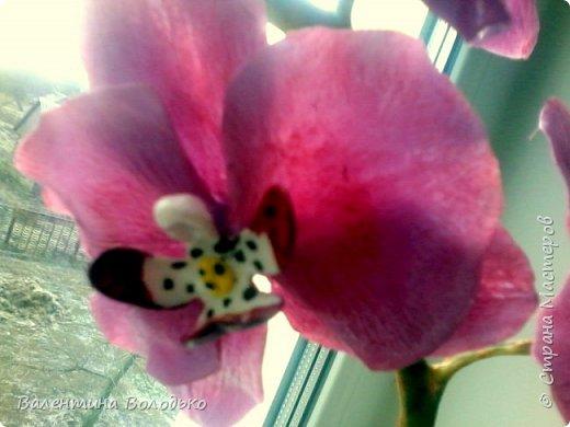 Здравствуйте дорогие жители Страны Мастеров!!!С праздником святого Валентина!!!.У меня снова орхидейки.Продолжаю эксперементировать и выполнять заказы.А также хочу поделиться с вами своей радостью,о моих увлечениях напечатали статью в районной газете ,а также организовали выставку в районному музее .Жаль не разрешили сфотографировать. фото 10