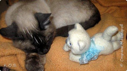 Валентинов кот фото 7