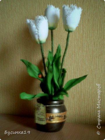 Белые тюльпаны фото 1