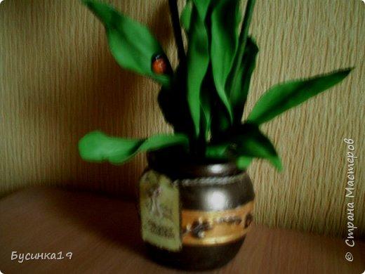 Белые тюльпаны фото 3