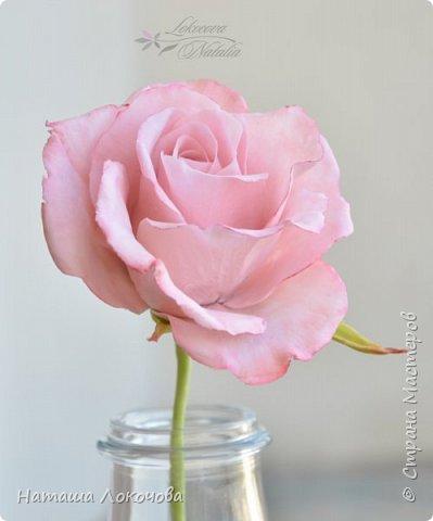 Роза из холодного фарфора. фото 3