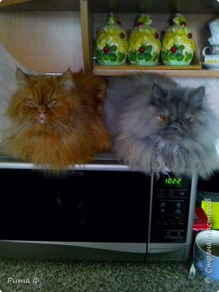 Огромное спасибо за идею Више (http://stranamasterov.ru/user/44976). По ее работам слепили с внучкой этих котиков для папы и мамы к праздникам. фото 4