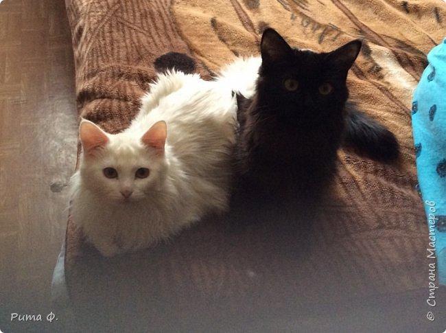Огромное спасибо за идею Више (http://stranamasterov.ru/user/44976). По ее работам слепили с внучкой этих котиков для папы и мамы к праздникам. фото 5
