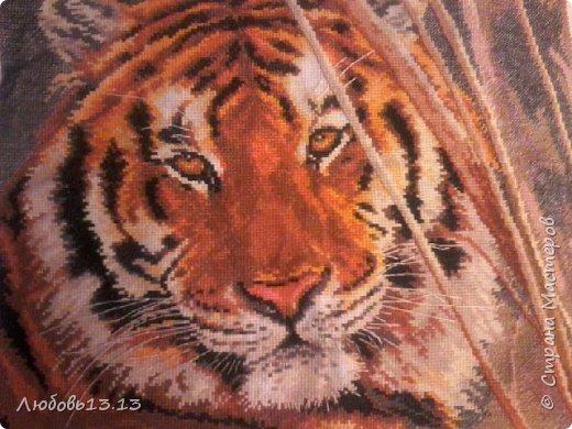 Мой тигрик))вышивала на работе когда было время и желание,и поэтому ушло аж два года)