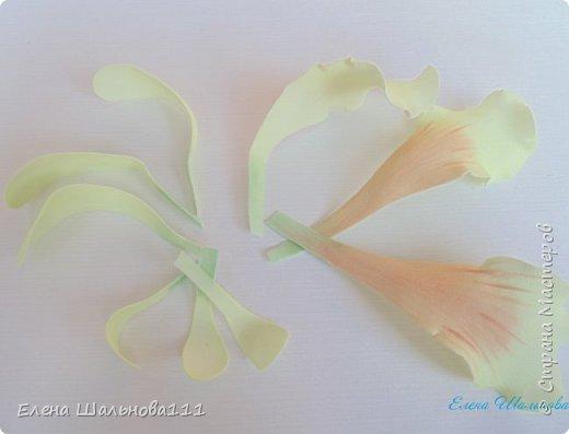 Материалы: - белый фоамиран корейский о,5 мм - зеленый иранский фоамиран 1 мм - пастель : светло-желтая,светло-зеленая,светло-коричневая,темно-коричневая - проволока для бисероплетения 0,4 мм - утюг - клеевой пистолет и горячий клей - зубочистка - влажные салфетки - ножницы фото 10