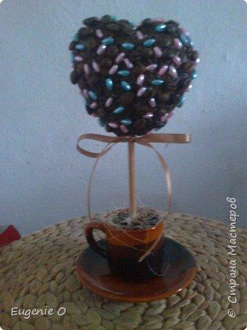 Наконец-то вырастила кофейные деревья!! Ура!! Блин, качество фото снова хромает...но, ничего, поправимо))) фото 3