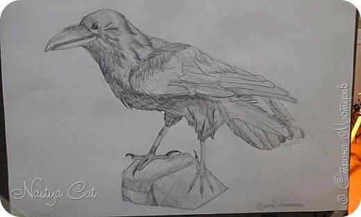 Мой ворон. фото 1