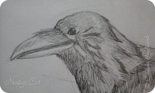 Мой ворон. фото 2