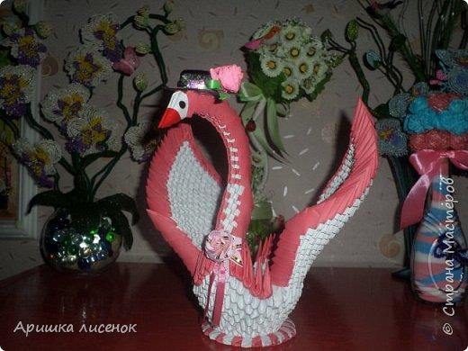 Лебеди. фото 4