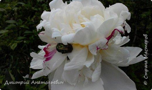 """Цветы """"Лето 2015"""" фото 2"""
