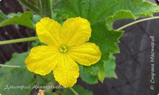 """Цветы """"Лето 2015"""" фото 10"""