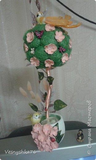 Новые деревца , хочется уже весны  фото 5