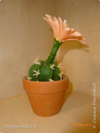 Добрый вечер, жители страны мастеров! Хочу поделиться с вами своей работой. Этот цветущий кактус я сделала в подарок для очень хорошего человека на долгую память обо мне. Думаю понравится. фото 1