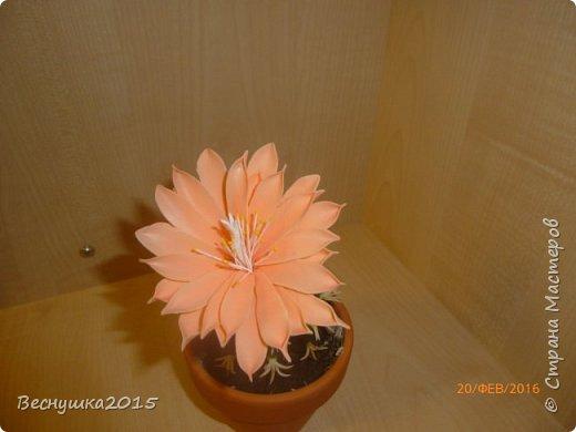 Добрый вечер, жители страны мастеров! Хочу поделиться с вами своей работой. Этот цветущий кактус я сделала в подарок для очень хорошего человека на долгую память обо мне. Думаю понравится. фото 3
