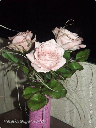 мои первые крупные розы фото 3