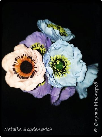 мои первые крупные розы фото 15